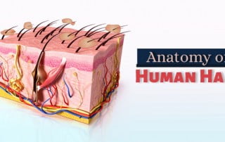 Anatomy-of-Human-Hair